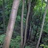 Никольское Провалье (Никольско-Набережное)