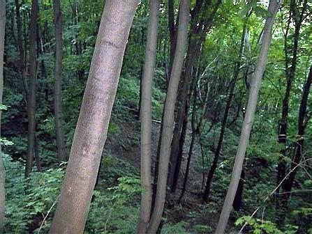 лес у бывшего Никольского провалья