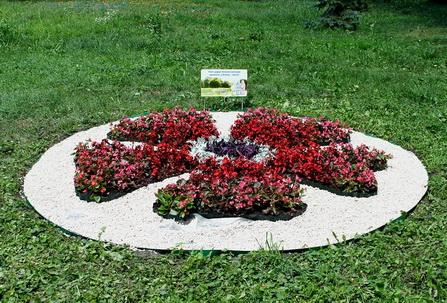 клумба «Silan» в Мариинском парке
